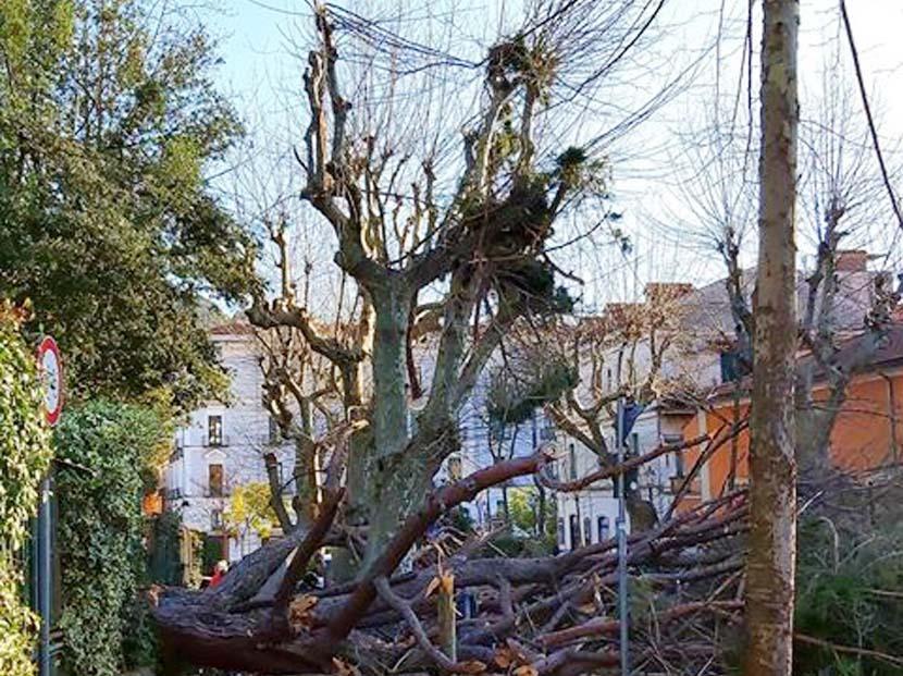 Albero caduto a Cava de' Tirreni