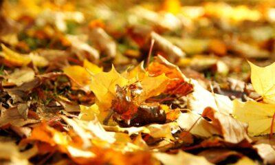Primo autunno foglie