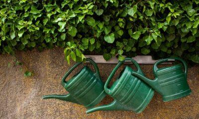 Giardinaggio Piante